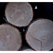 Дуб кругляк 1 сорт фото