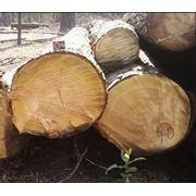 Лесоматериалы. Лес-кругляк. фото