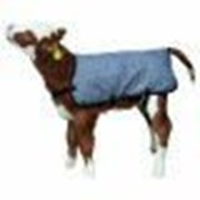 Термонакидка для теленка фото