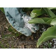 Профессиональные удобрения для растений, внесение удобрений фото