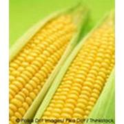 Реализация сельхозпродукции фото