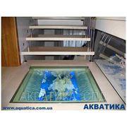 Сухие композиции в стеклянных конструкциях фото
