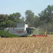 Агропроизводство. Сельскохозяйственная продукция безупречного качества фото