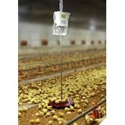 Автоматические весы для птицы (Чехия) фото