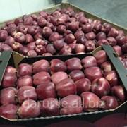 Яблоки Супер Чиф фото