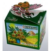 Бархатцы Азбука растений Bontiland наборы для выращивания, (411456) фото