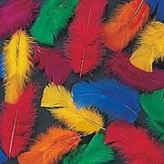 Цветные перья фото
