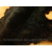Кролик черный фото