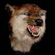 Чучело Волк фото