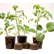 Спрессованное твердое органическое удобрение «Посадочное гнездо». фото