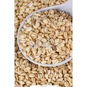 Семена зерновых культур фотография