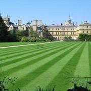 Восстановление травостоя и дернины травы газона фото