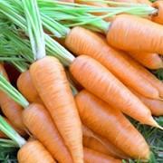 Морковь. фото