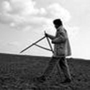 Сдача земли землепользователям фото