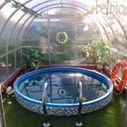Аренда бассейна фото