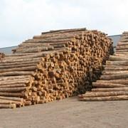 Лесоматериалы сосна, дуб, ольха, тополь фото