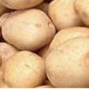 Картофельный протеиновый концентрат фото