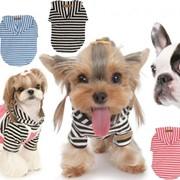 Одежда и аксессуары для домашних животних оптом фотография