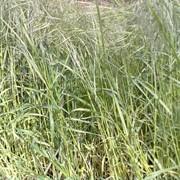 Покос травы, косить траву. фото
