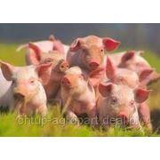 Луктаром - улучшили вкуса и запахов кормов фото