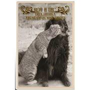 стрижки собак и котов в Запорожье фото