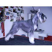 Груминг собак. Парикмахерская для собак. фото
