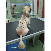 Услуги парикмахера для животных в Одессепарикмахер домашних животных грумер в Одессе