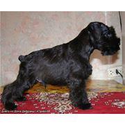 Стрижка и тримминг собак фото