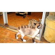 эксклюзивные стрижки котов фото