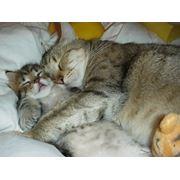 Стрижка собак и котов вынужденная гигиеничная. фото