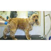 Стрижка собак вынужденная фото