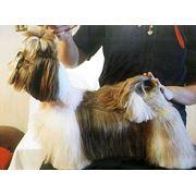 Стрижка собак и котов фото