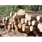 Закупка леса древесины фото