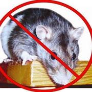 Дератизация. Борьба с крысами, мышами, грызунами фото