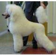 Услуги парикмахерские для собак Запорожье Украина фото