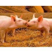 Консультации по кормлению животных фото