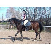Содержание часных лошадей, обучение верховой езде, продажа лашадей фото