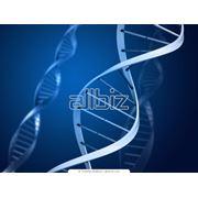Молекулярно-генетические исследования фото
