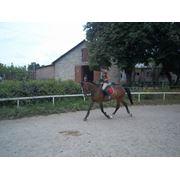 Покататся на лошади Черкассы фото