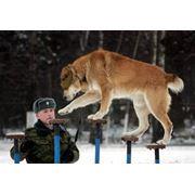 Дрессировка собак(Кинолог-зоопсихолог) Харьков фото