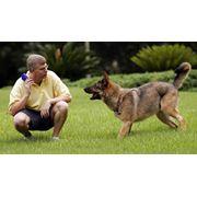 Дрессировка собак в Николаеве Цена фото