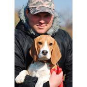 Дрессировка собак в Харькове цена фото