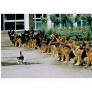 Дрессировка животных фото