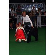 Дрессировка собак хендлинг фото