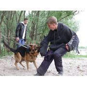 Программа Защитная собака фото