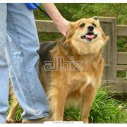 Дрессировкавоспитание собак фото