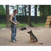 Дрессировка и воспитание собак Дрессировка ЩЕНКОВ Донецк и область фото