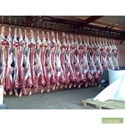 Мясо говядины, охлажденное в полутушах и четвертинах фото