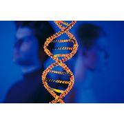 Тест ДНК-анализ на отцовство ДНК тест во всех городах Украины Анализ ДНК на отцовство Тест ДНК на установление отцовства Заказать Тест ДНК на установление отцовства фото