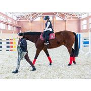 Прокат лошадей. Прокат верховых лошадей. Навыки верховой езды. Катание на лошадях Иппотерапия. Общение с животными. Рекреация и реабилитация вызванная стрессами и пассивным образом жизни. Повышение самооценки. фото